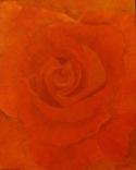 red rose original oil painting