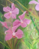 Orchids oil painting by Navdeep Kular