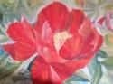 red peony painting