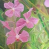 floral painting orchids oil painting by Navdeep Kular