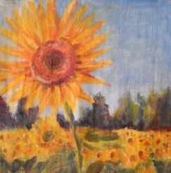 #161 Sunflower Fields 4